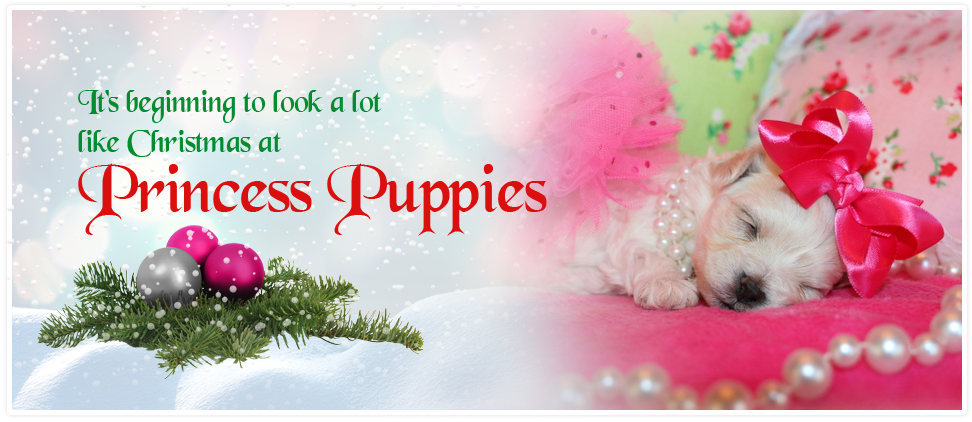 Puppies For Sale In Louisiana Yorkie Maltese Shih Tzu And More